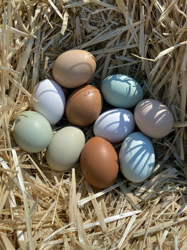 A pretty assortment from Eggcellence Inc | Photo courtesy Nate and Anna Smedts